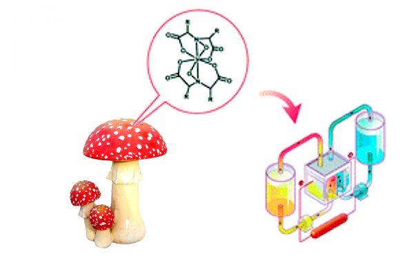 Отруйні гриби і стабільність роботи акумуляторів